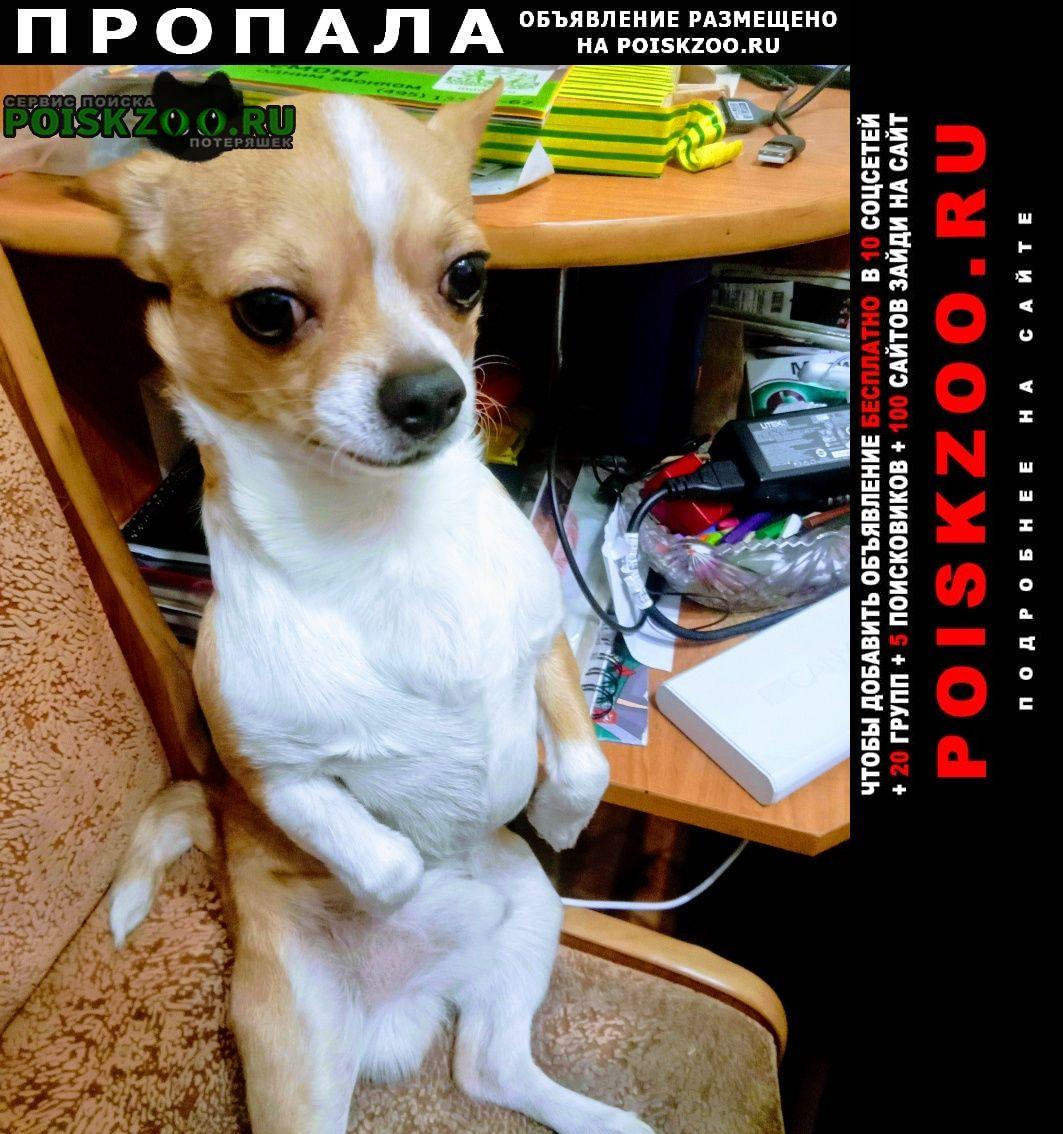 Пропала собака потерялось Москва
