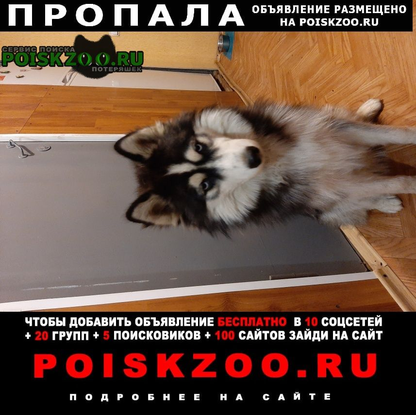 Пропала собака убежал в. районе зоналка Саратов