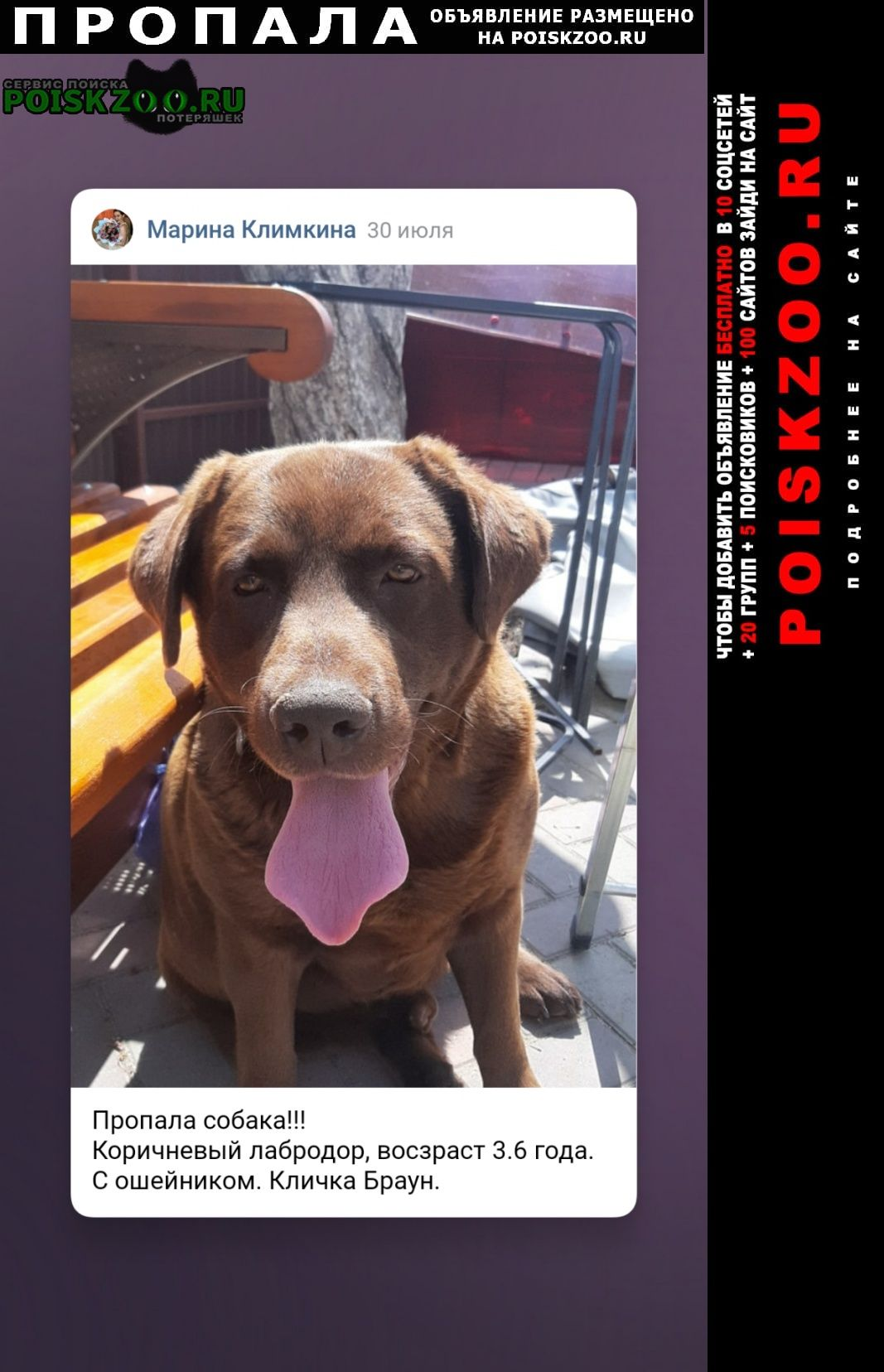 Пропала собака ищу лабродора Пенза