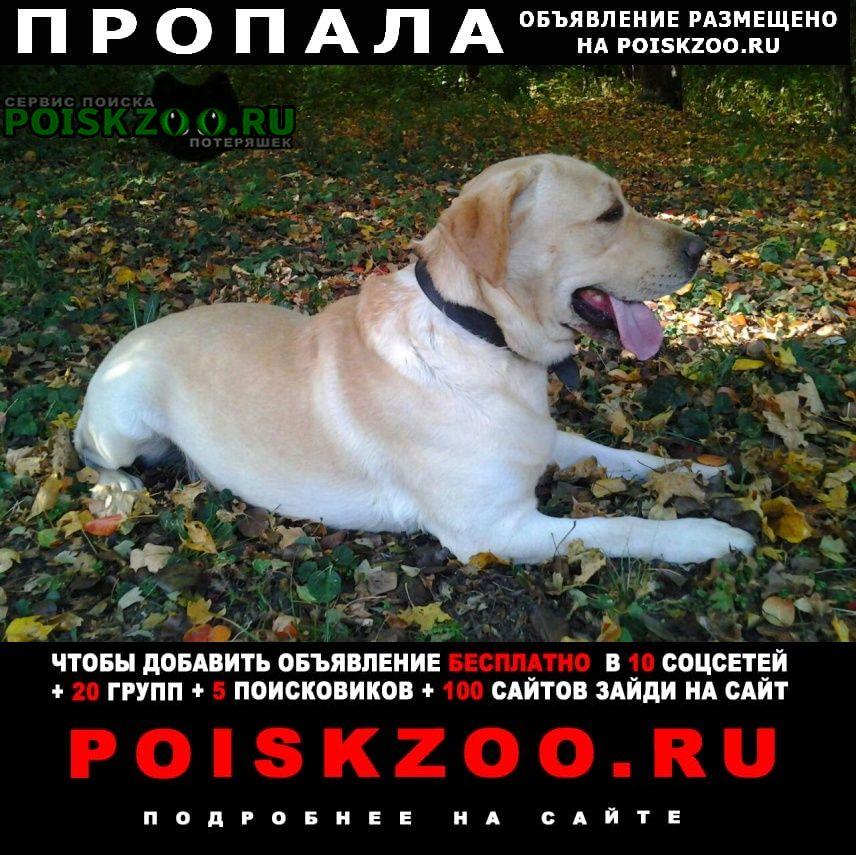 Пропала собака Аксай (Ростовская обл.)