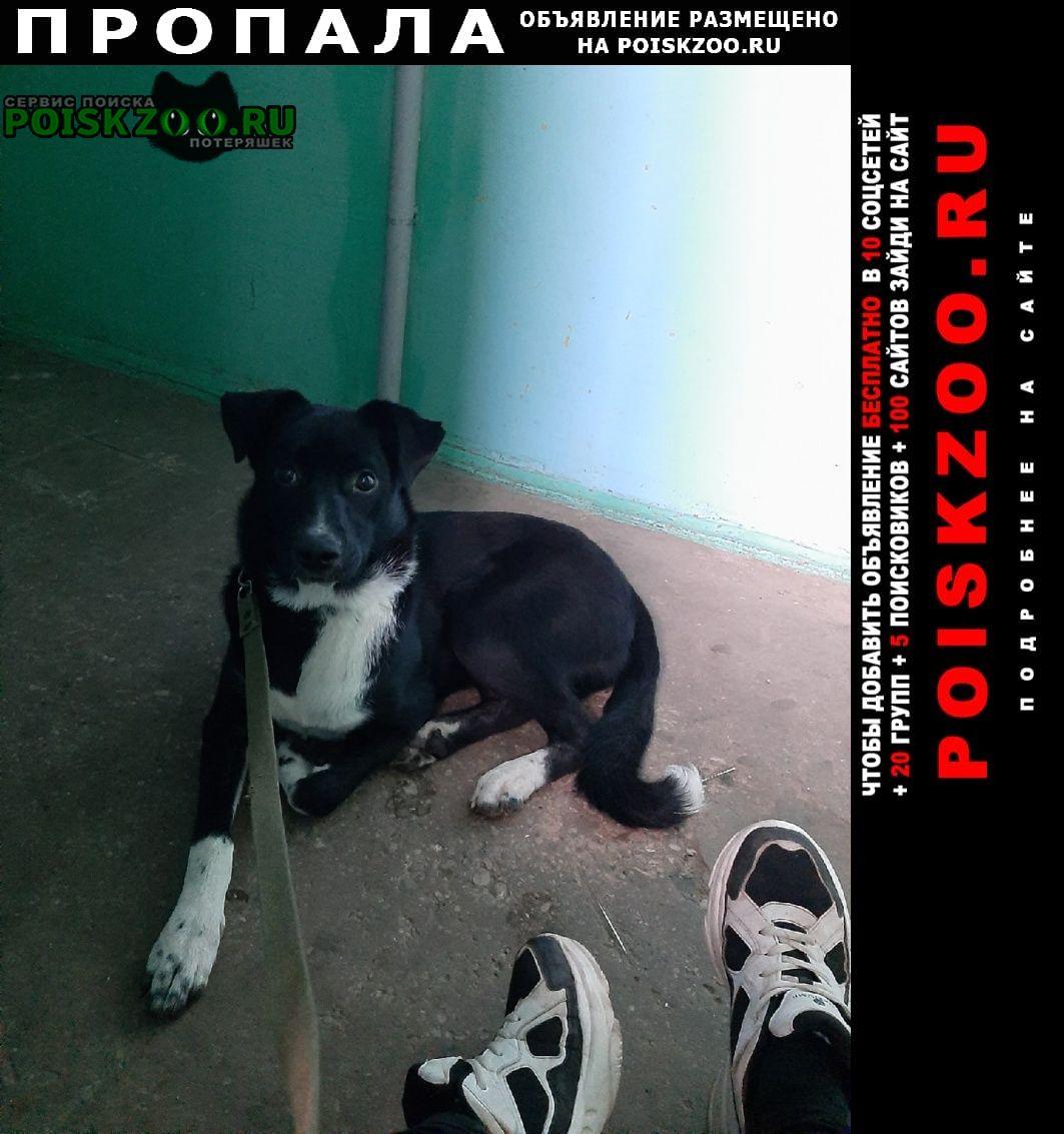 Пропала собака вознаграждение тому кто найдёт Великий Новгород (Новгород)