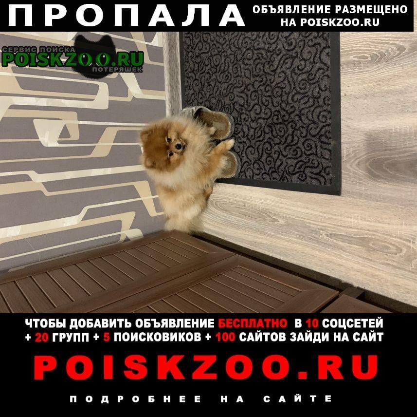 Пропала собака помогите страдает ребёнок Домодедово
