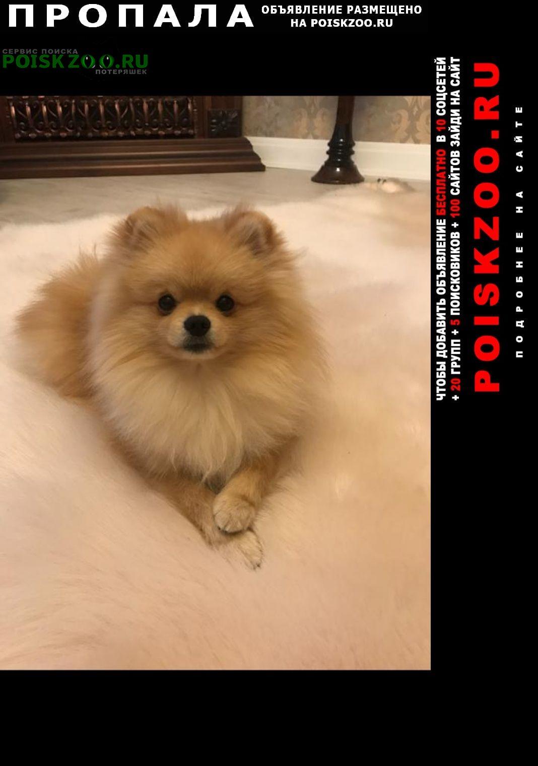 Пропала собака шпиц Красноярск
