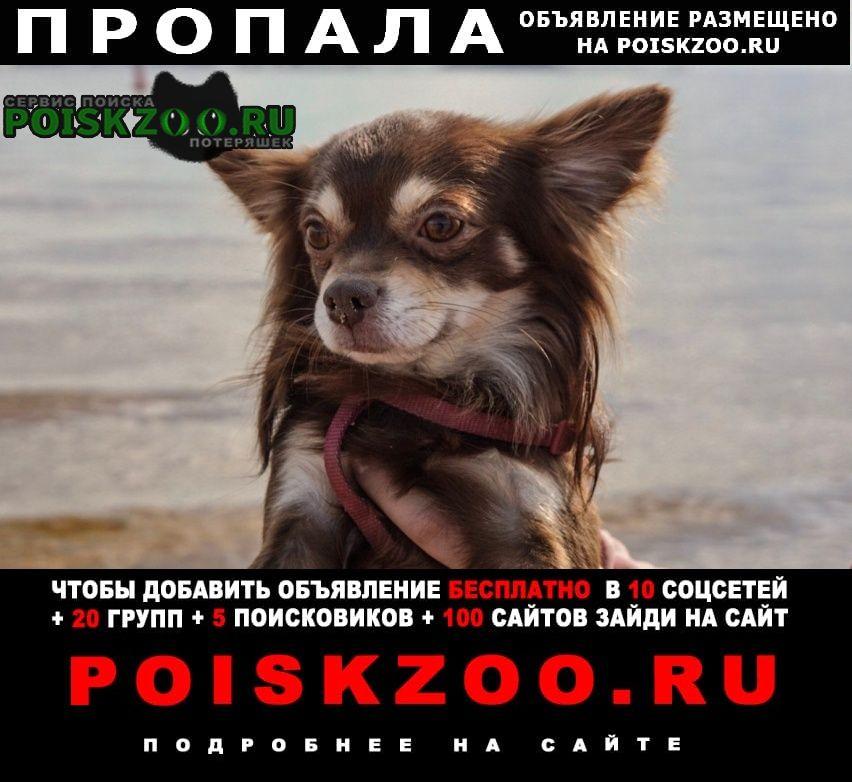 Пропала собака кукуруз, найдись Пятигорск