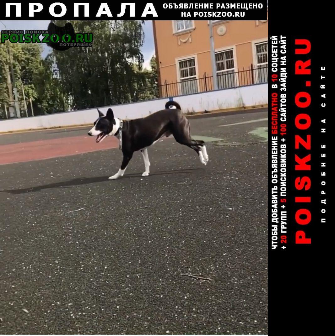 Пропала собака Косино