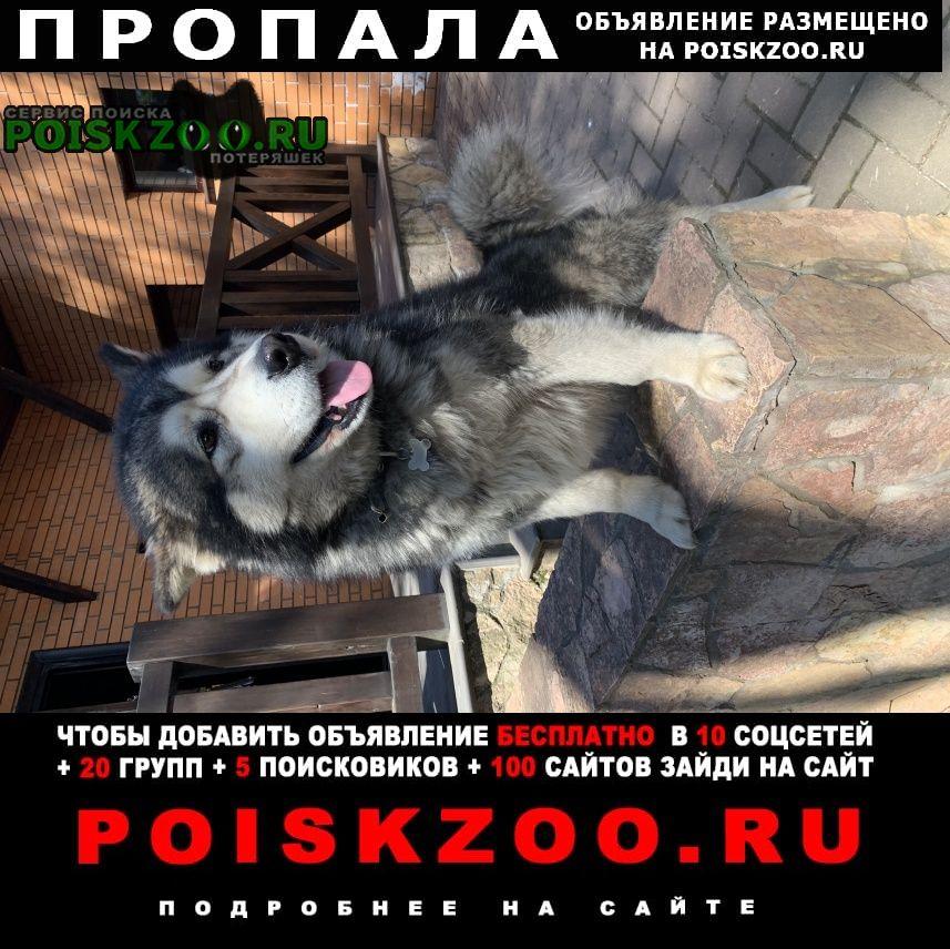 Пропала собака севера надо вернуть домой Парголово