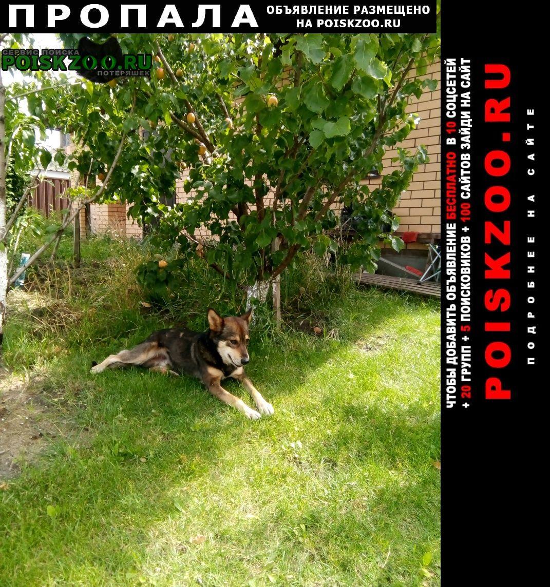 Пропала собака бп Белгород