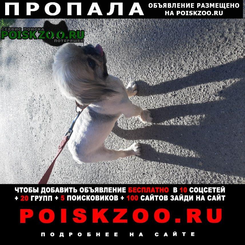 Пропала собака внимание  домашний любимец  Казань