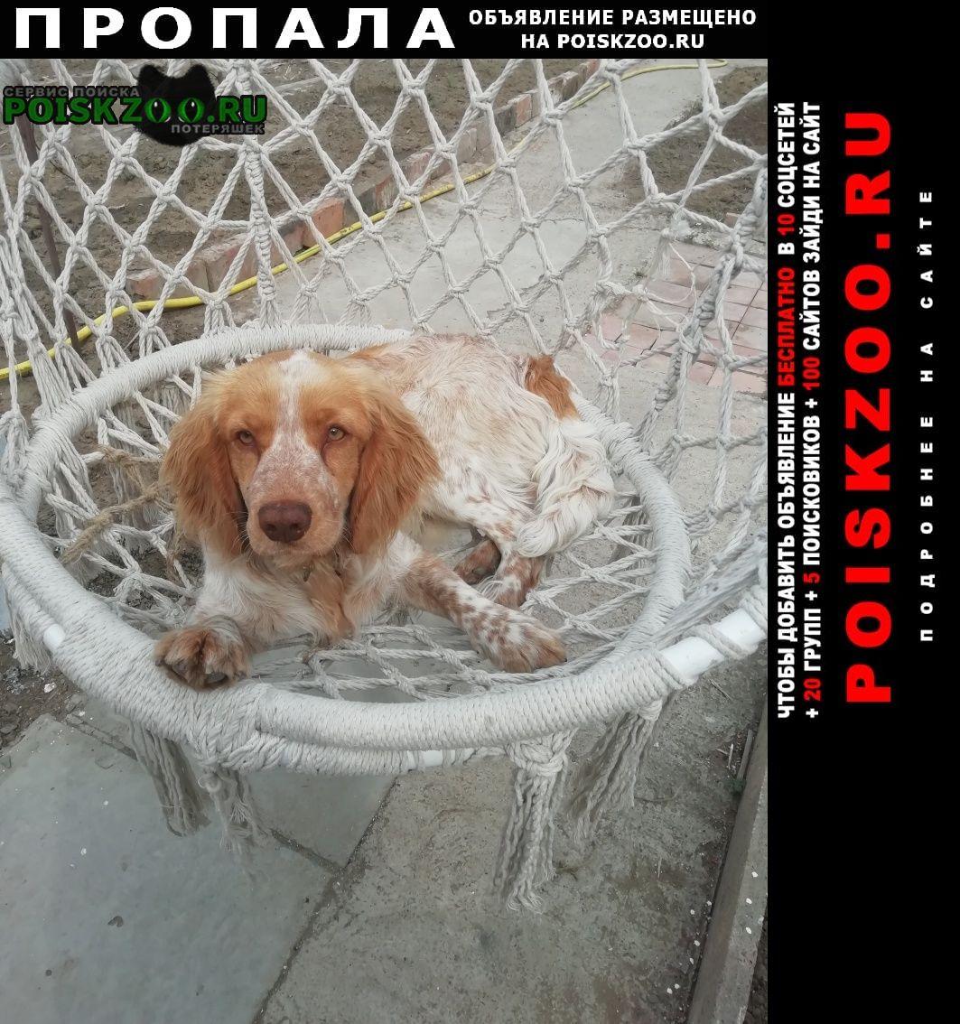 Пропала собака спаниэль Астрахань