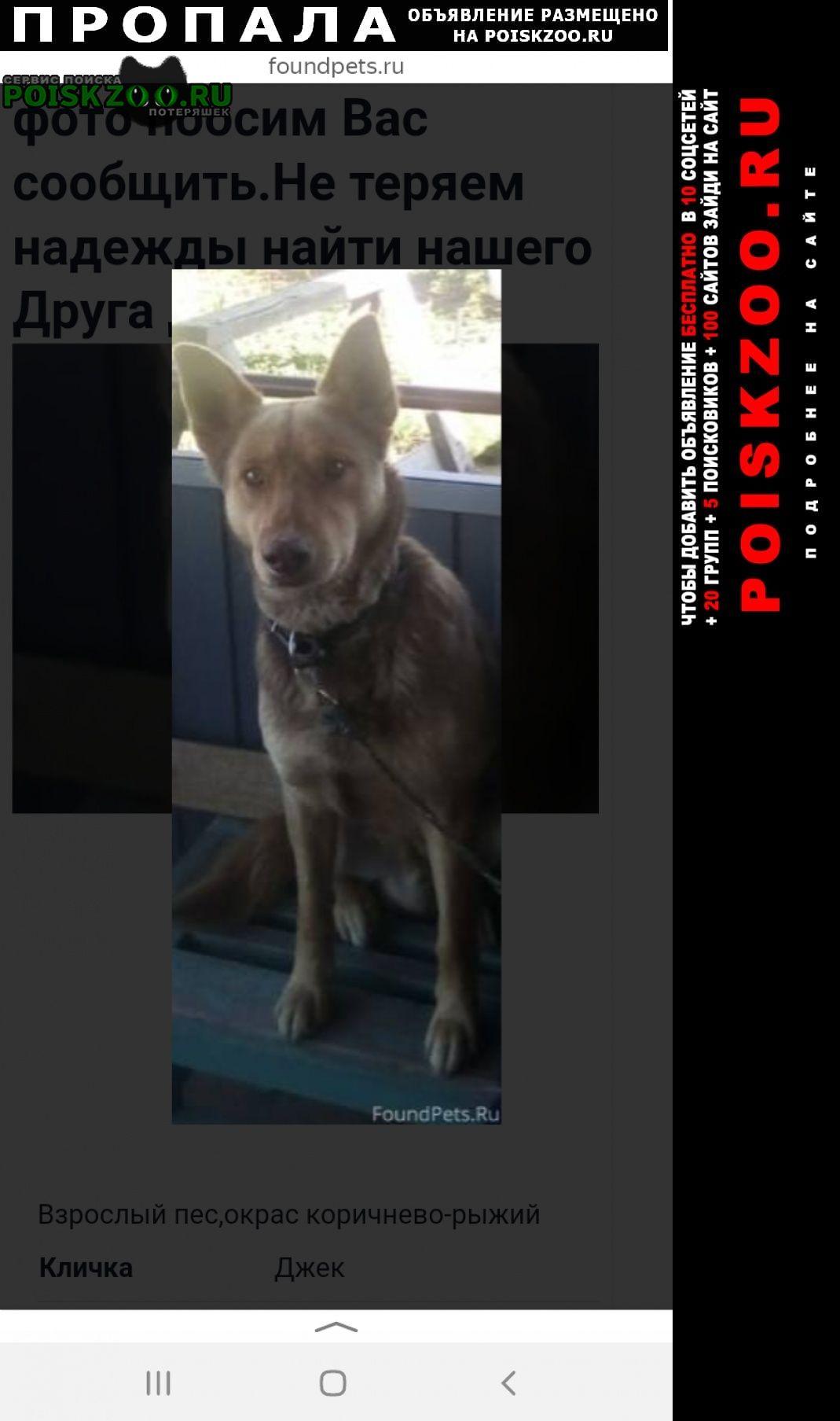 Пропала собака помогите найти друга Ахтубинск