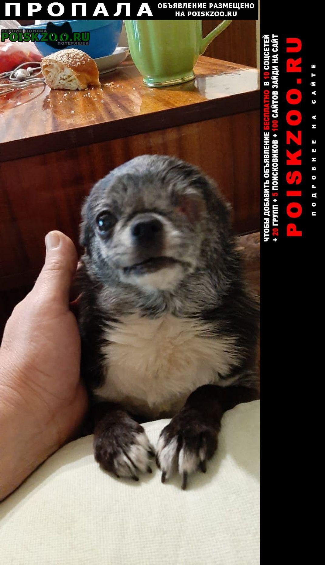 Пропала собака Жуковский