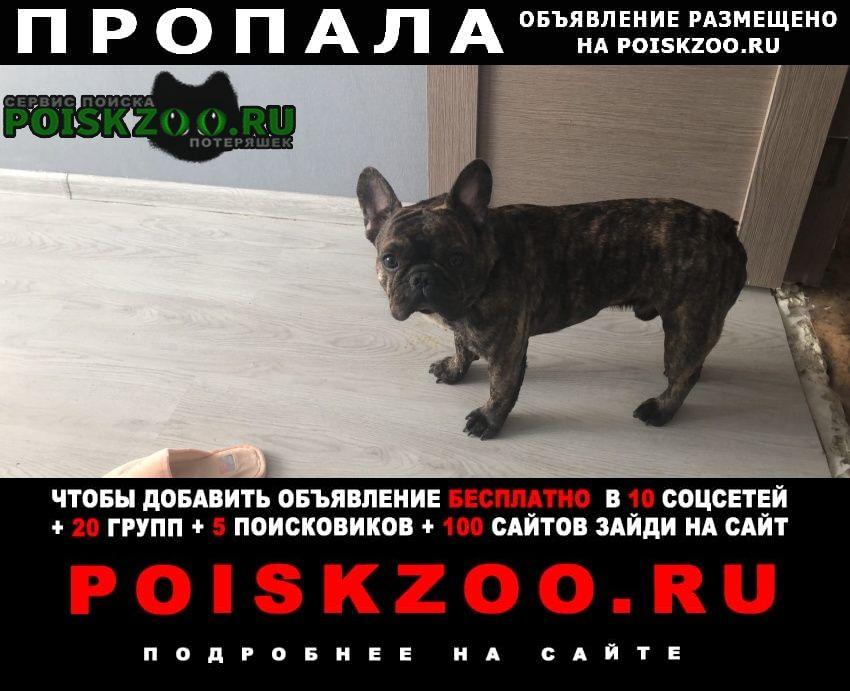 Пропала собака срочно Львовский