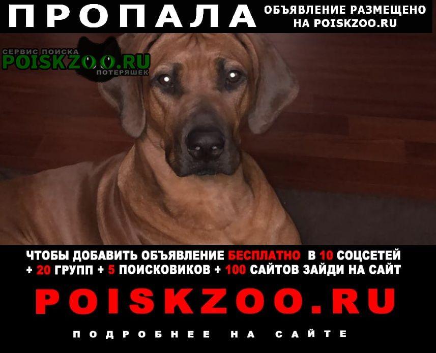 Пропала собака родезийский риджбек Красногорск