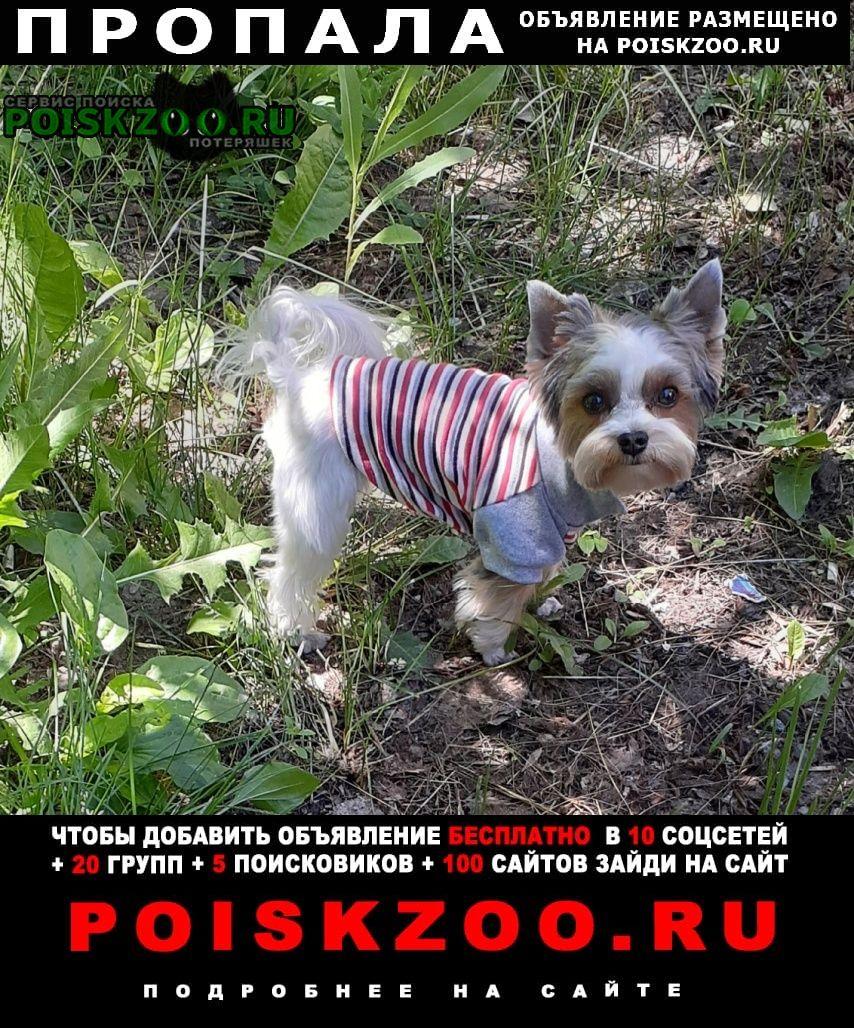 Пропала собака бивер-йорк Тольятти