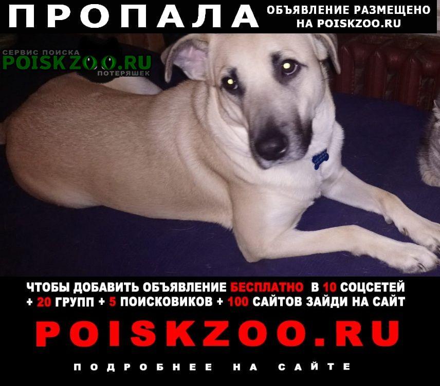 Пропала собака маруся друзья, нужна ваша помощь Подольск