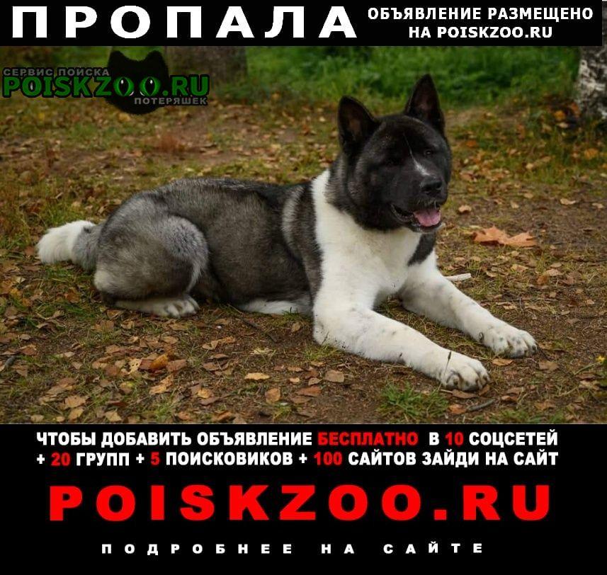 Пропала собака в репино Зеленогорск (Ленинградская обл.)
