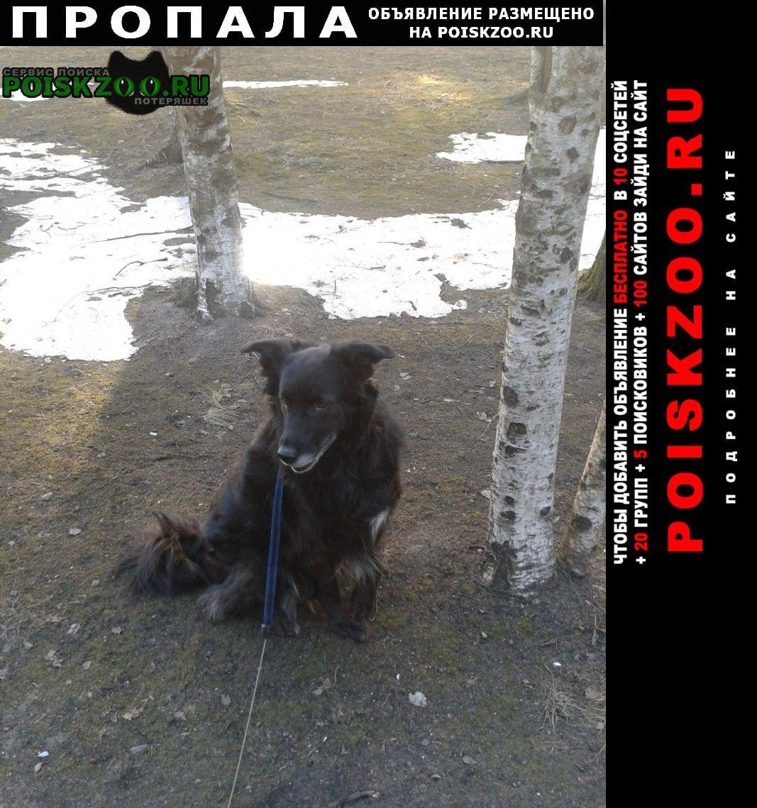 Пропала собака черная среднего размера Санкт-Петербург