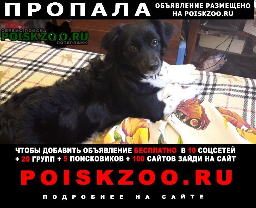 Пропала собака Нижний Тагил
