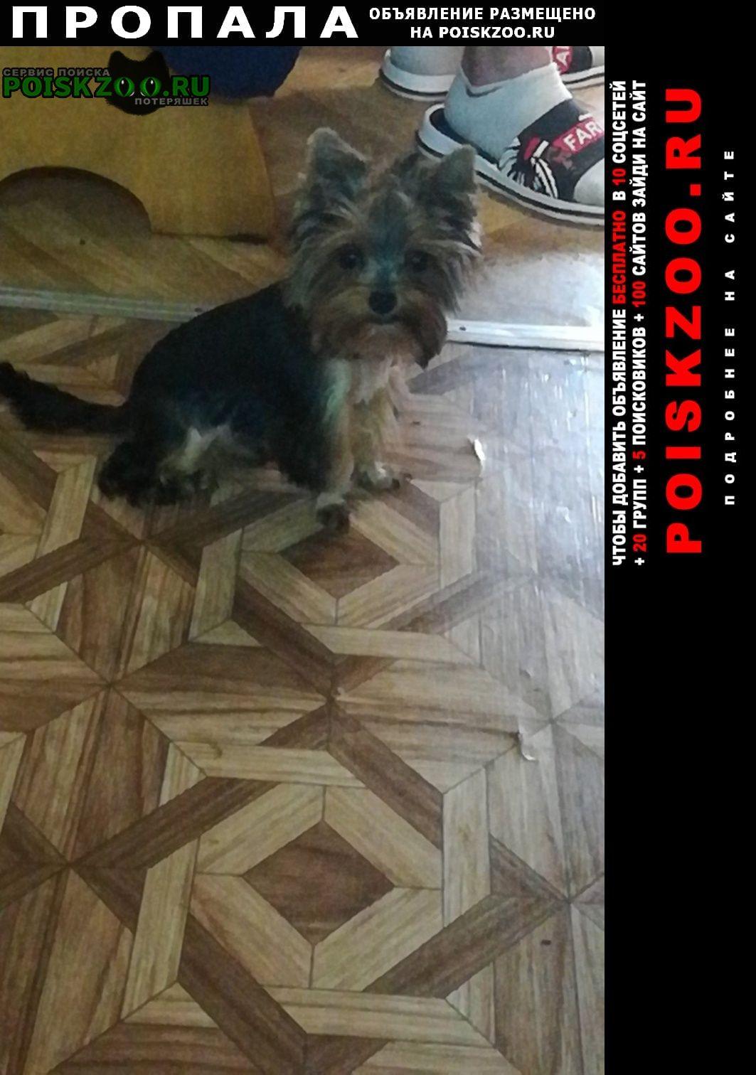 Пропала собака Ковров