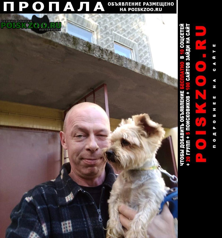 Пропала собака йоркширский терьер. Санкт-Петербург