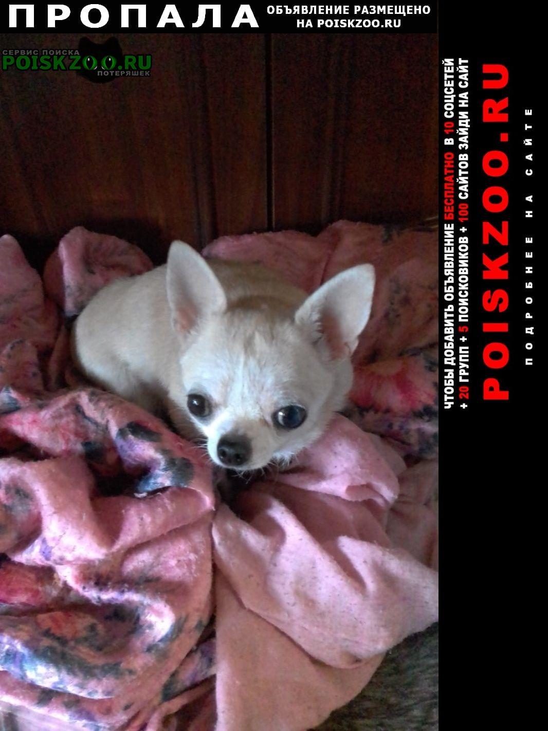 Пропала собака просьба кто видел или знает где находитс Мичуринск