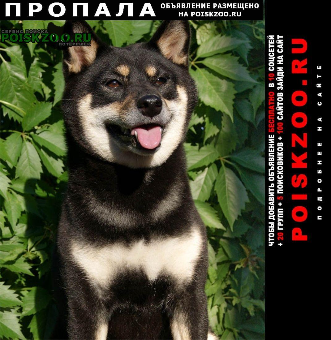 Пропала собака -москва Истра