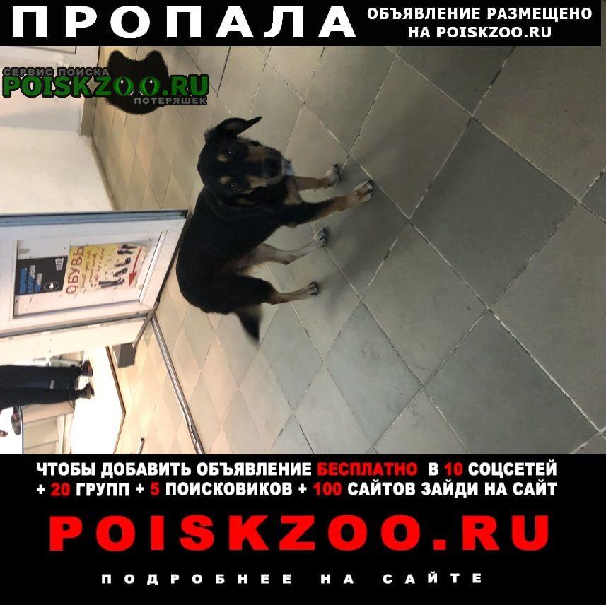 Пропала собака очень срочно  при смерти Волхов
