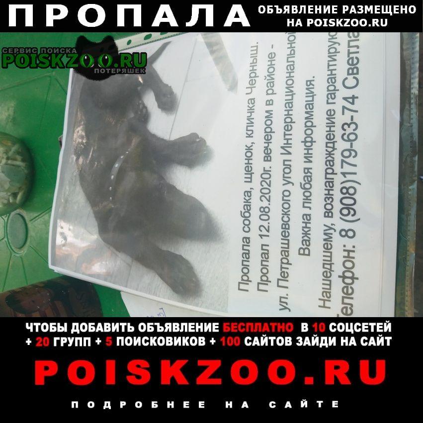 Пропала собака кличка черныш Ростов-на-Дону