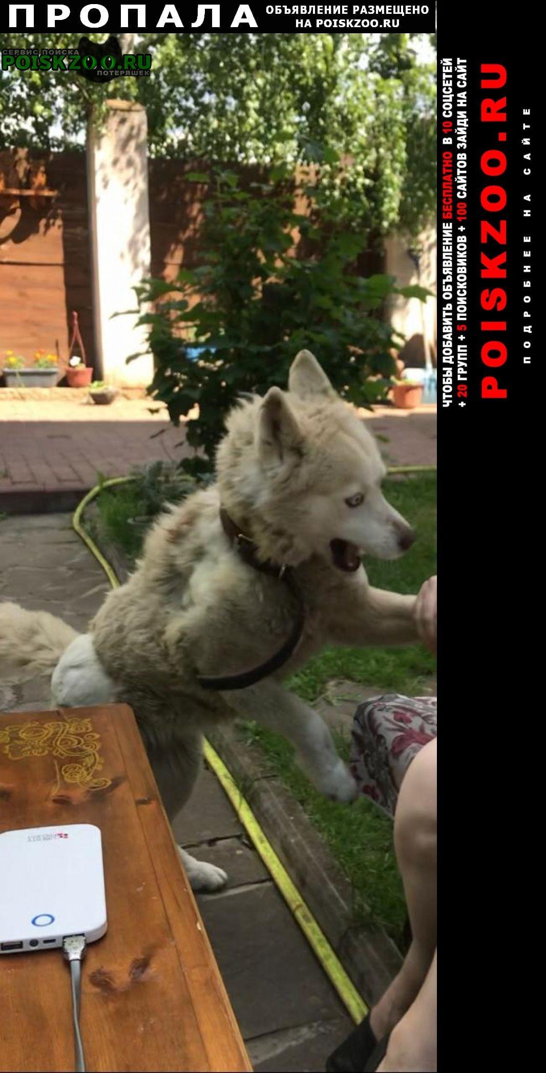 Пропала собака Первомайский (Московская обл.)