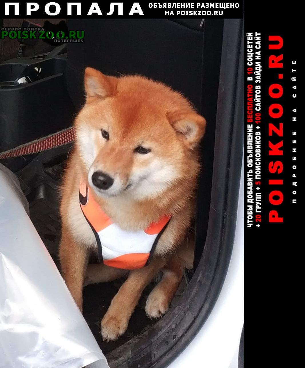 Пропала собака посёлок болдино Петушки