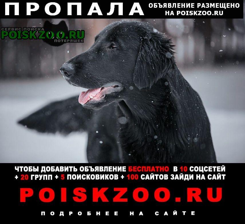 Пропала собака два ретривера черный и золотисты Арамиль