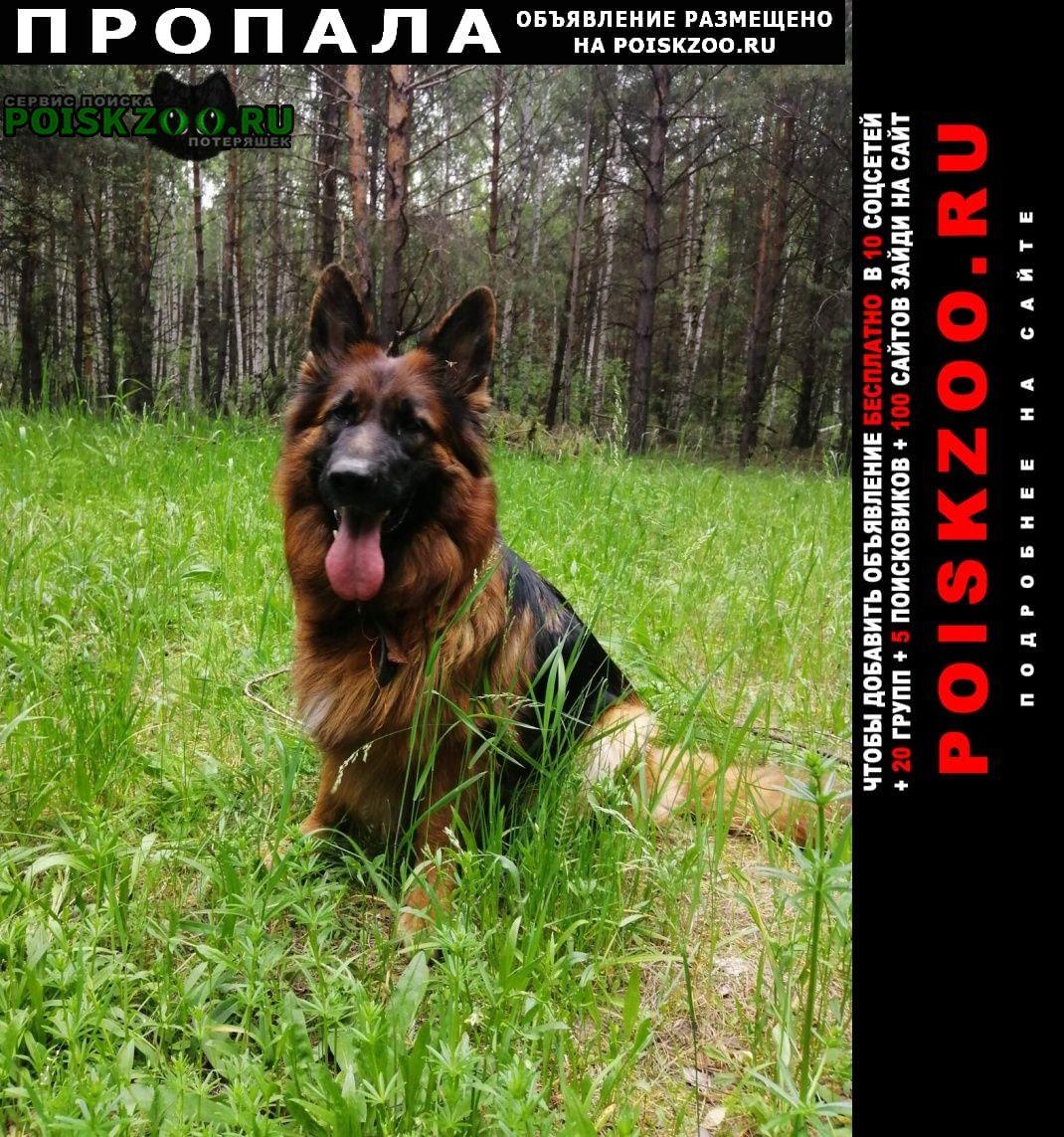 Пропала собака пожалуйста опубликуйте  Шемышейка