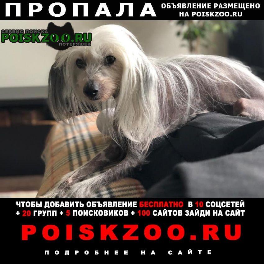 Пропала собака потерялась китайская хохлатая Москва