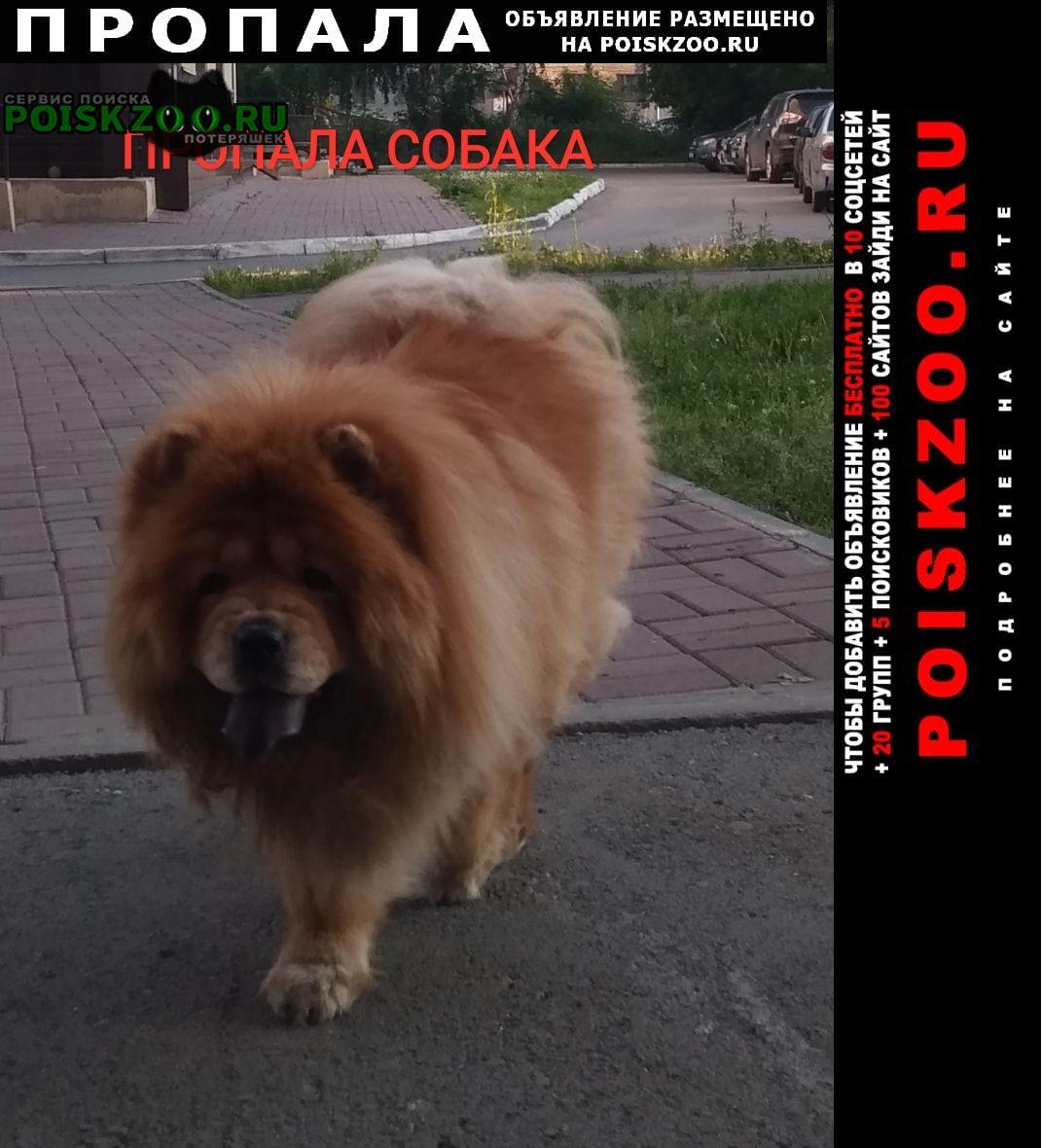 Пропала собака чау-чау алиса Новосибирск