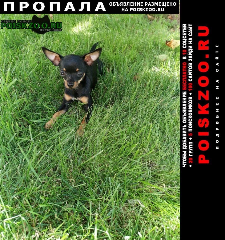 Пропала собака Рязань