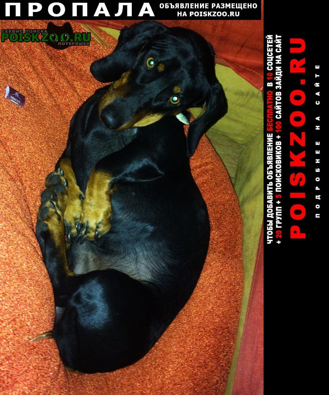 Пропала собака sos Хабаровск