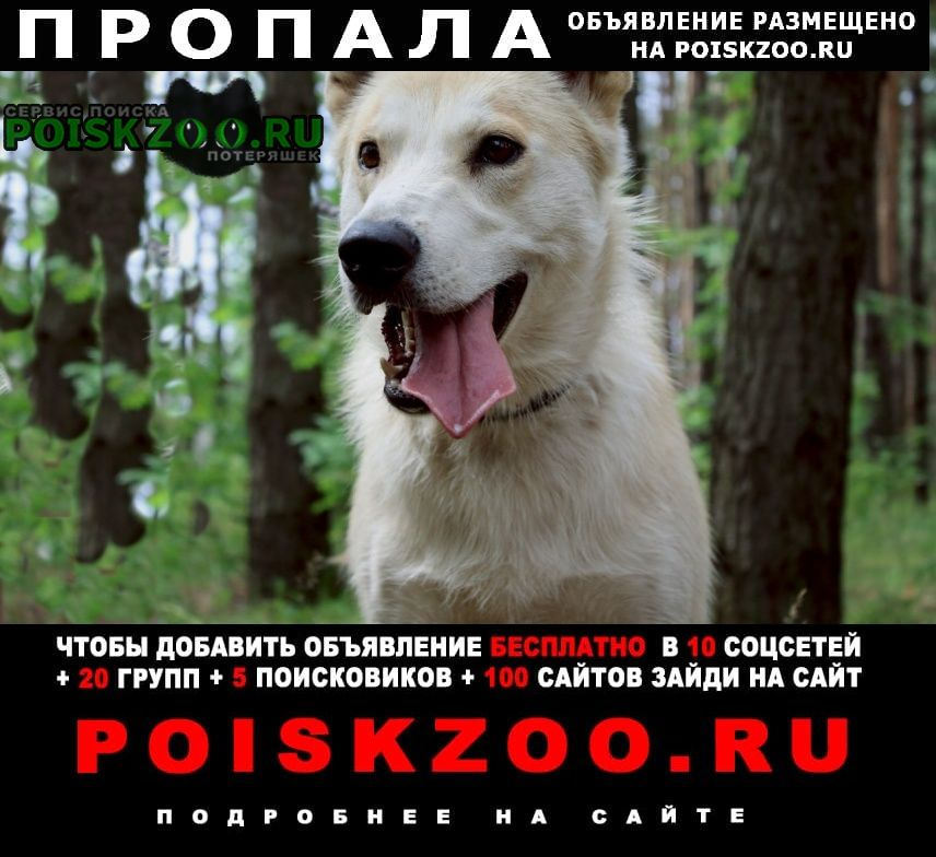 Пропала собака прапала сабака белла Нижний Новгород