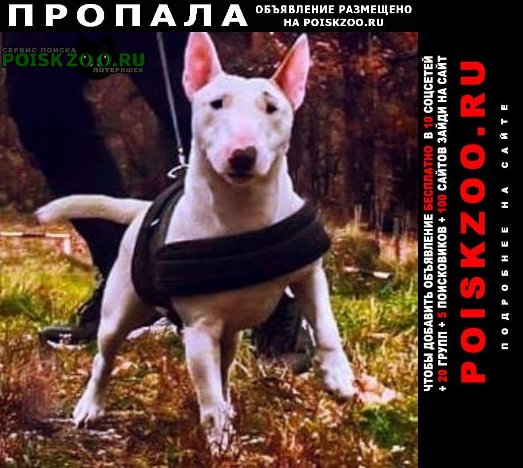 Пропала собака член семьи Москва
