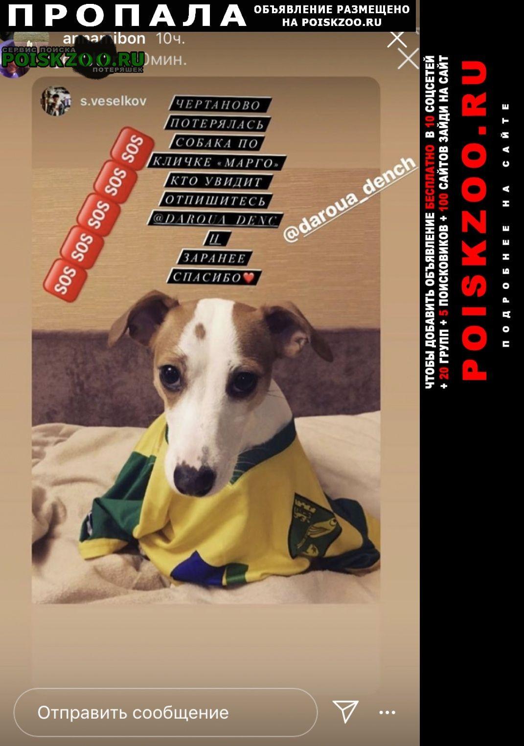 Пропала собака джек рассел Москва