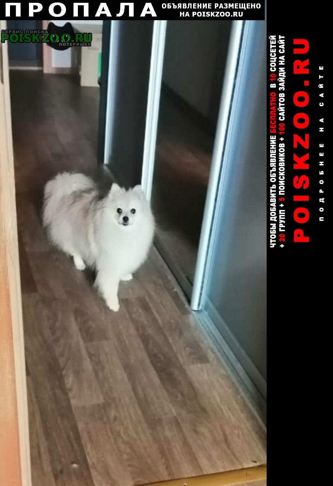 Пропала собака г.колтуши деревня верхняя Всеволожск