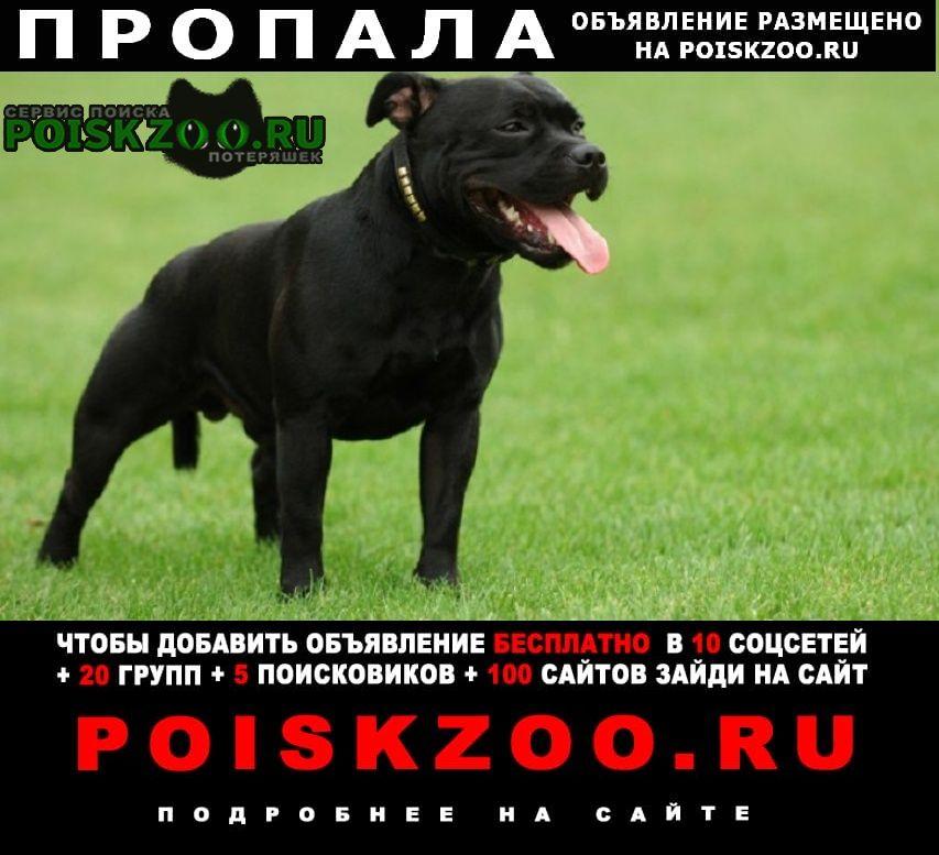 Пропала собака помогите Серпухов