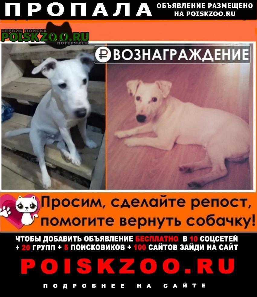 Пропала собака джек рассел терьер Ленинский