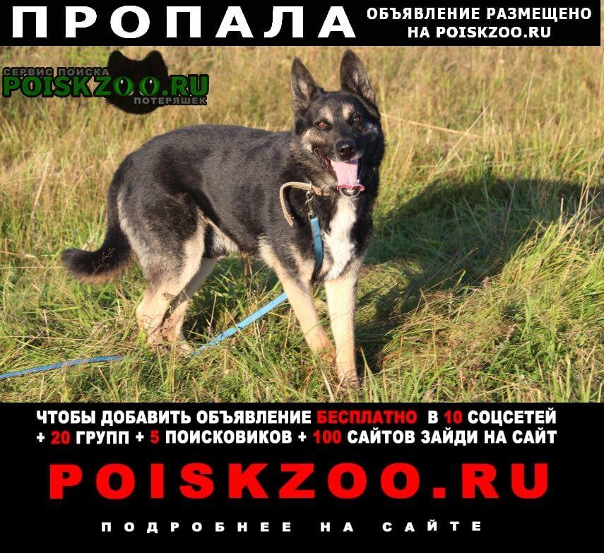 Пропала собака увезла хозяйка передержки Переславль-Залесский