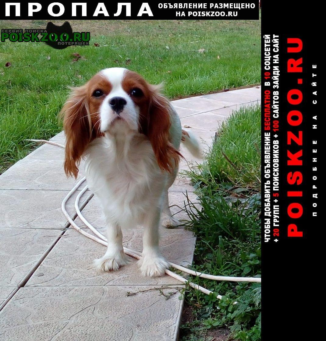 Пропала собака потерялась возле деревни коньково Солнечногорск
