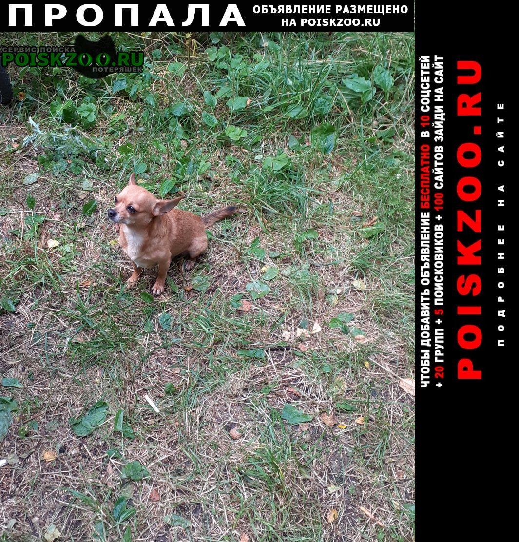 Пропала собака микр-он южный Подольск