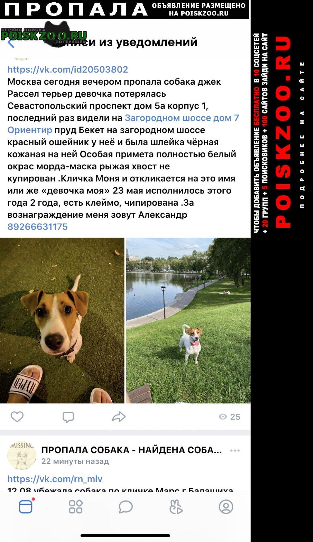 Пропала собака потерялась наша любимица домашняя Москва