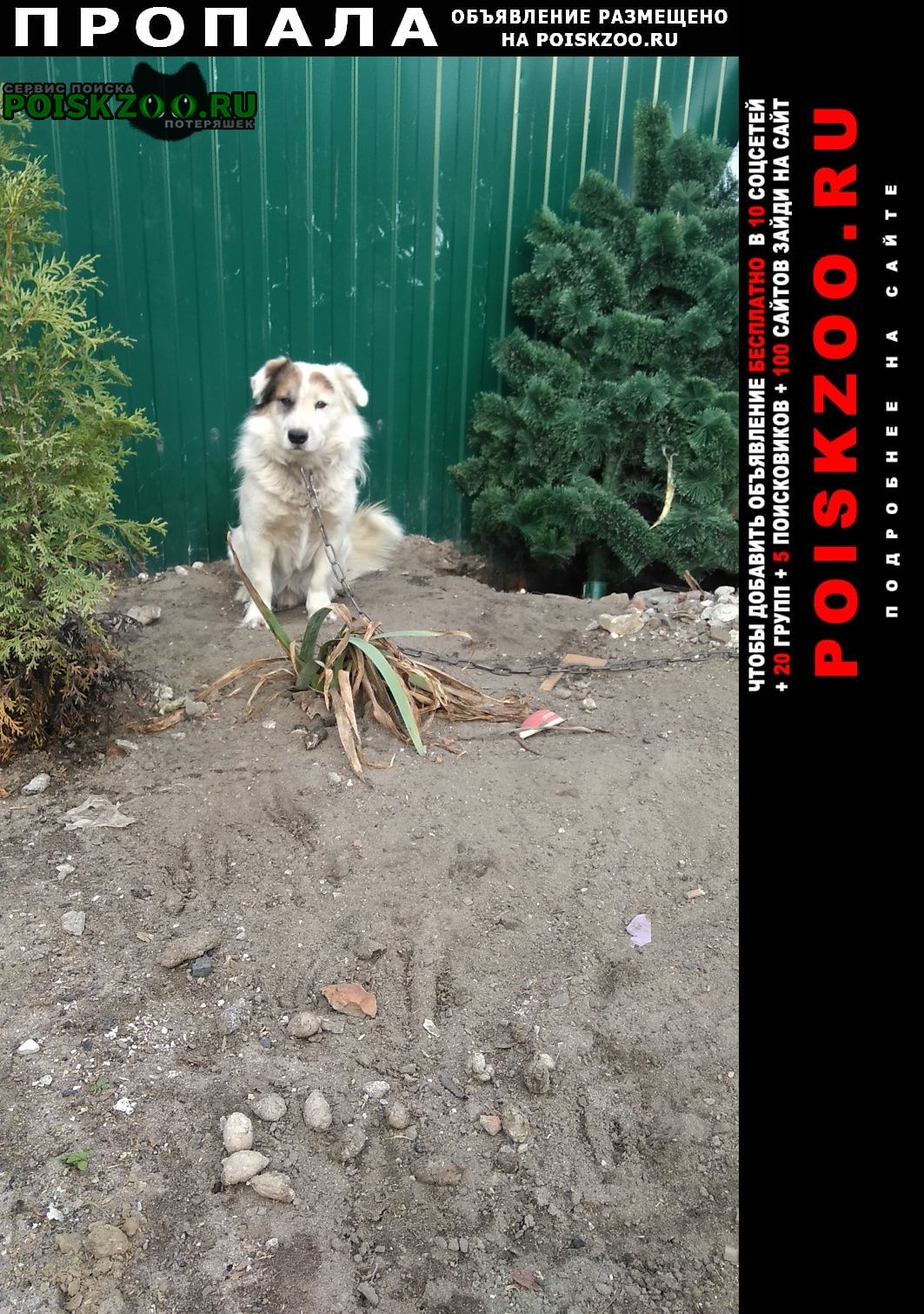 Пропала собака степан Воронеж