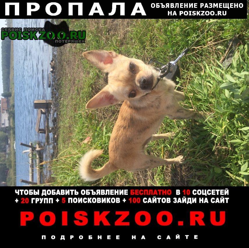 Пропала собака помогите Иркутск