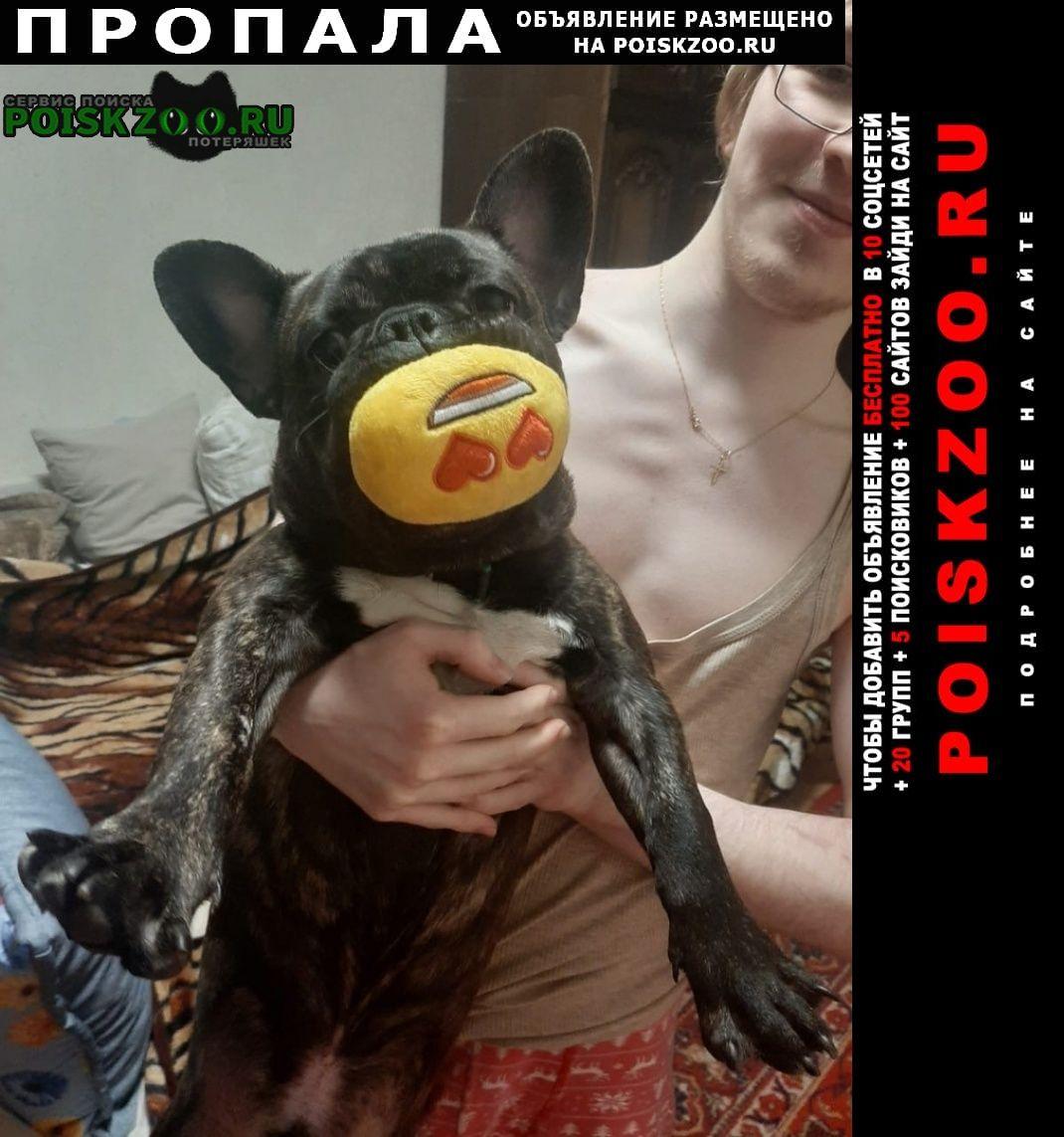 Пропала собака французский бульдог в строгино Москва