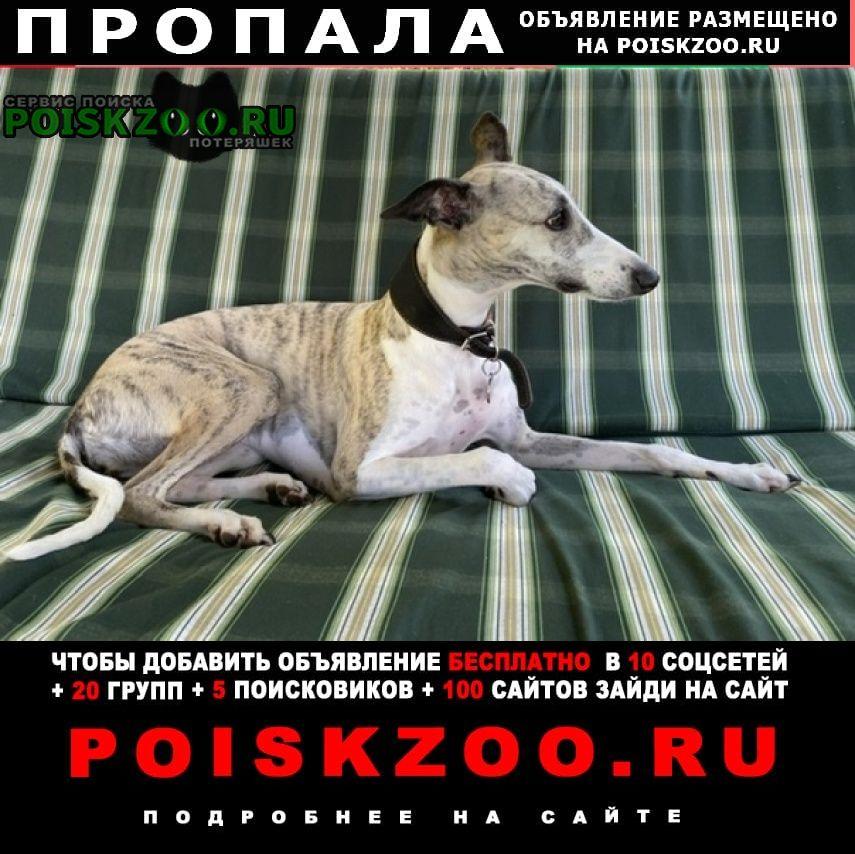Пропала собака завидово Новоподрезково